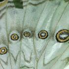 Butterflies Go Free 2005