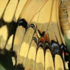 Papillons en liberté 2005
