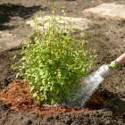 Plantation d'arbustes - techniques horticoles
