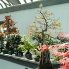 Les arbres miniatures du Jardin céleste.
