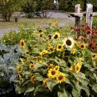 Vegetable garden for biodiversity