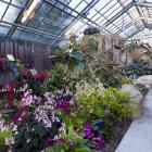 Begoniaceae and Gesneriacea Conservatory.