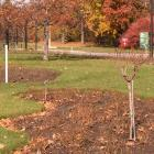 Staking and pruning