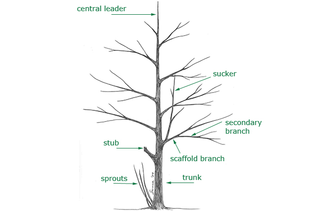 Pruning Techniques Space For Life