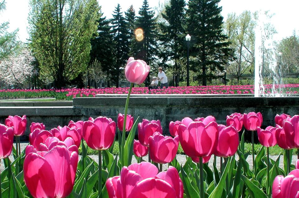 Planificateur de visite espace pour la vie for Biodome insectarium jardin botanique