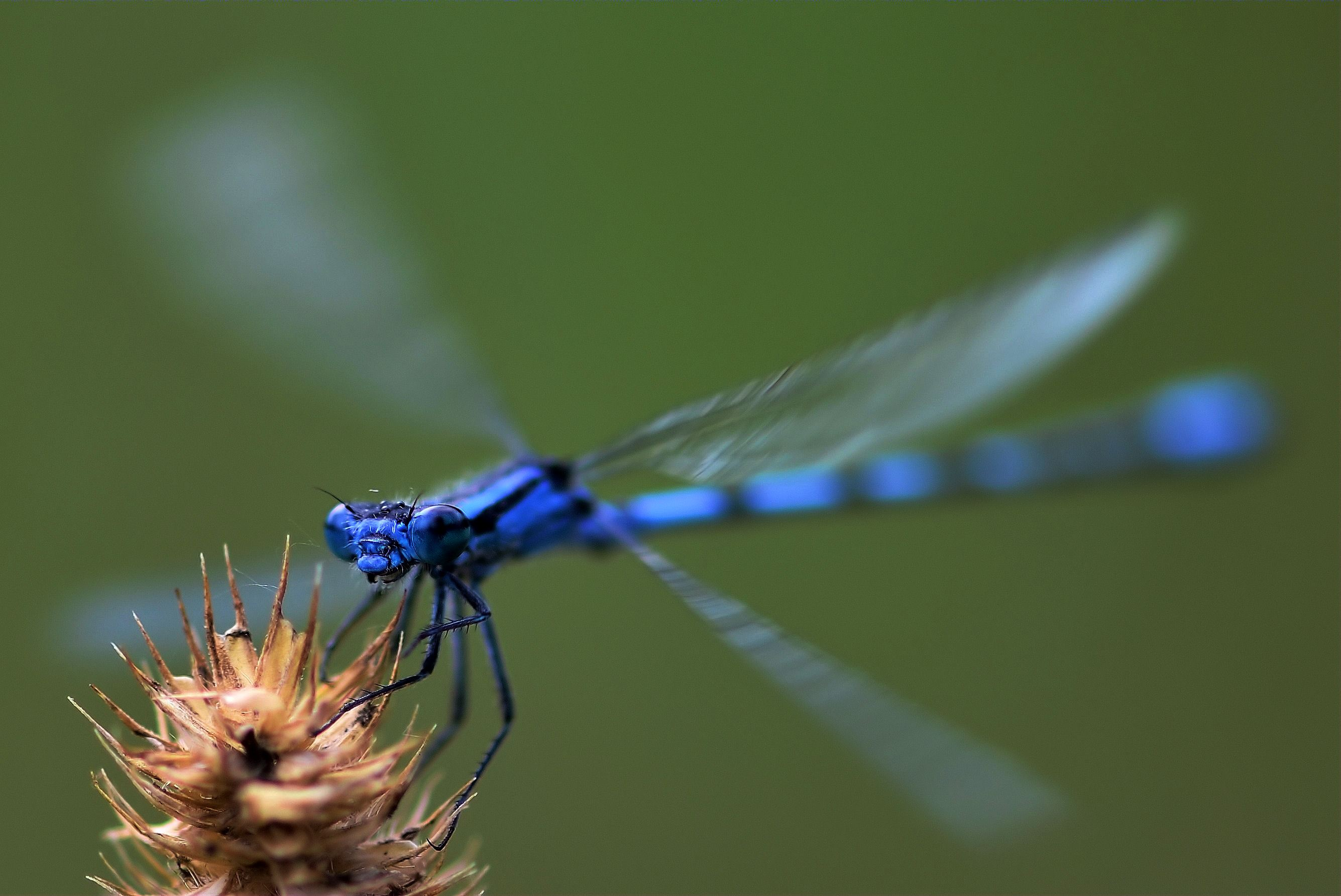 Insects And Other Arthropods Space For Life